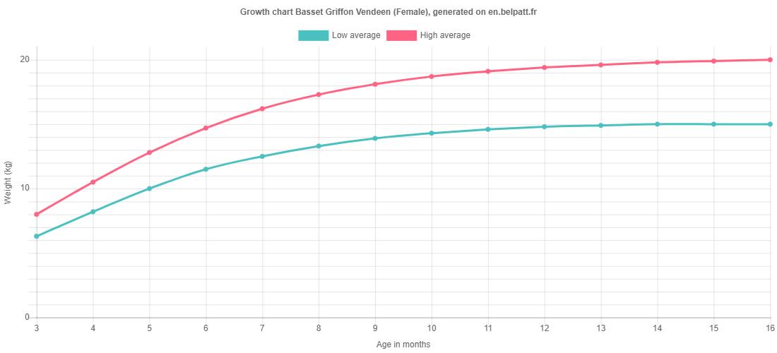 Growth chart Basset Griffon Vendeen female