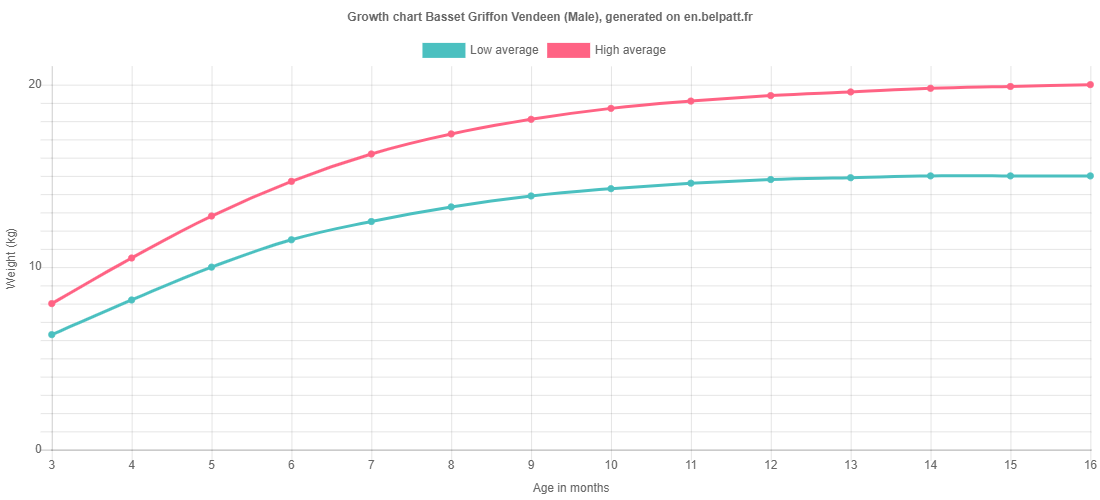 Growth chart Basset Griffon Vendeen male