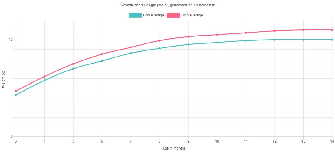 Growth chart Beagle male