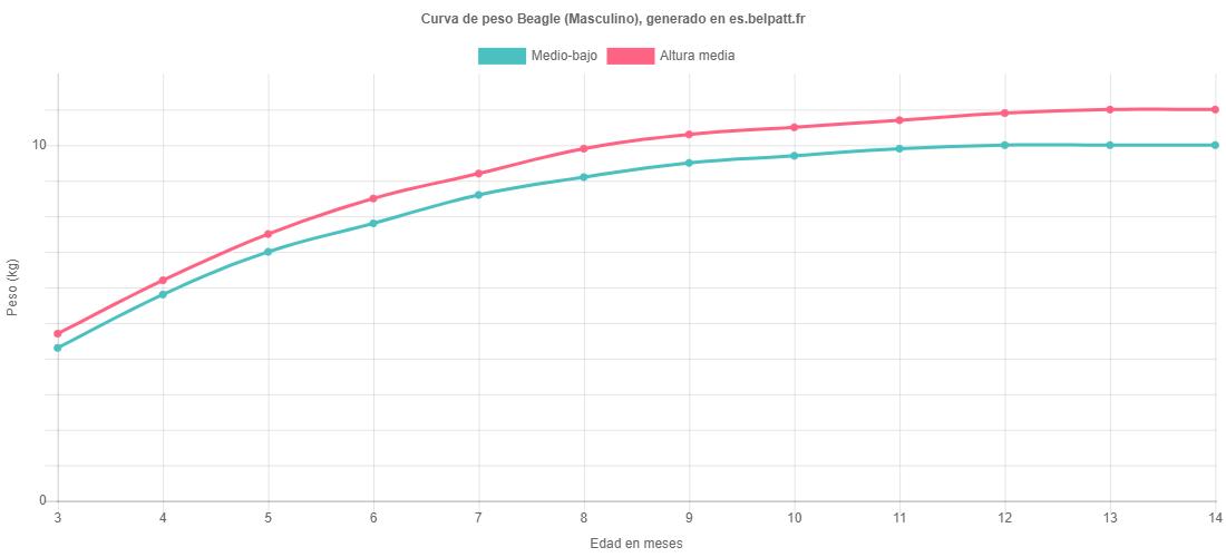 Curva de crecimiento Beagle masculino