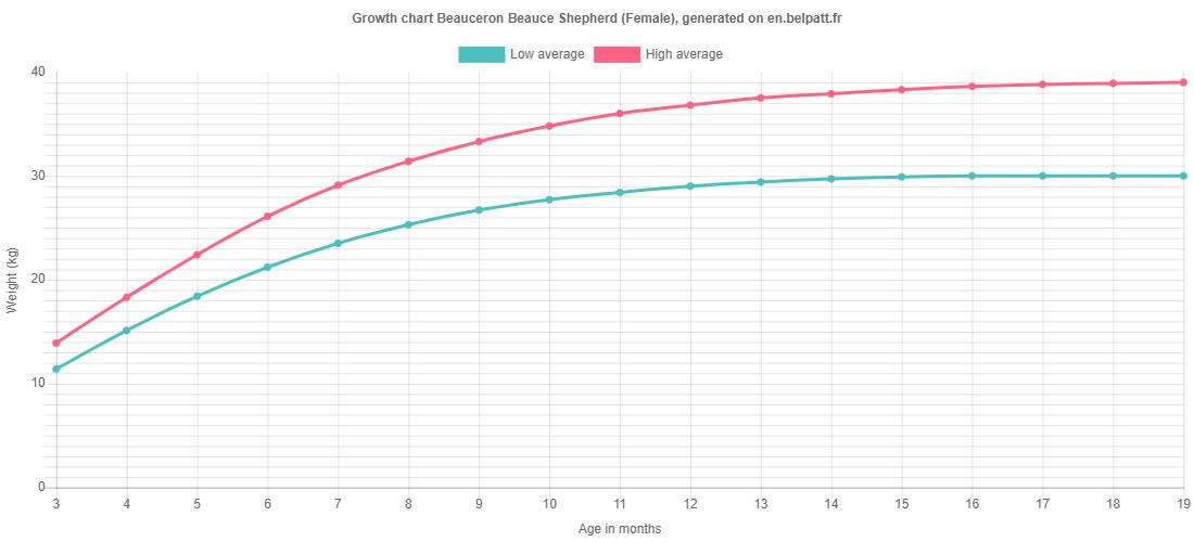 Growth chart Beauceron Beauce Shepherd female