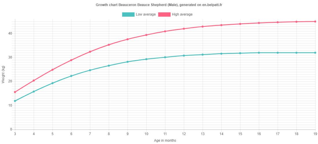 Growth chart Beauceron Beauce Shepherd male
