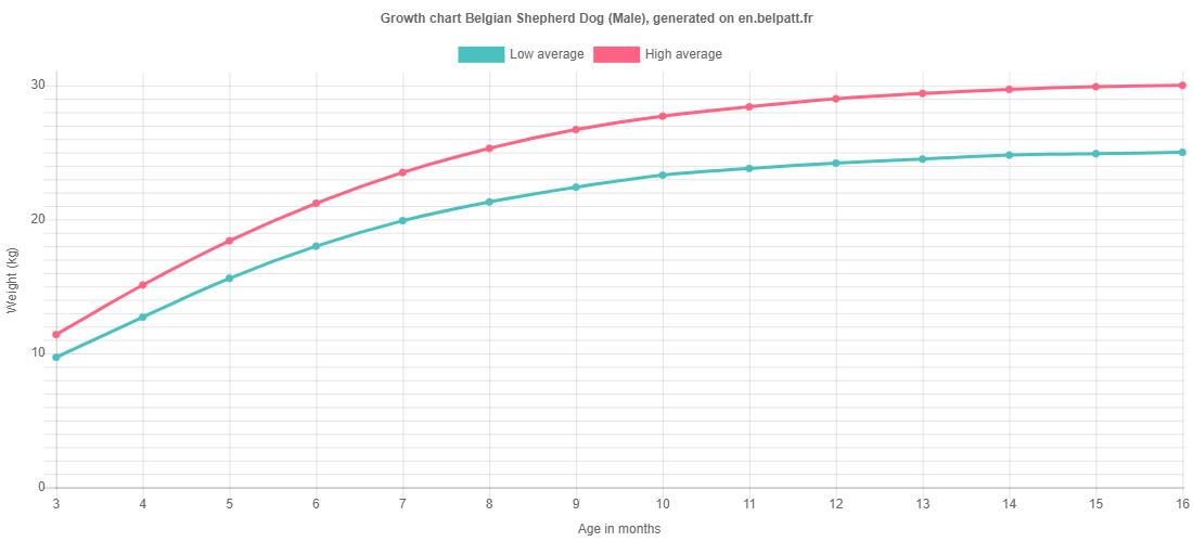 Growth chart Belgian Shepherd Dog male