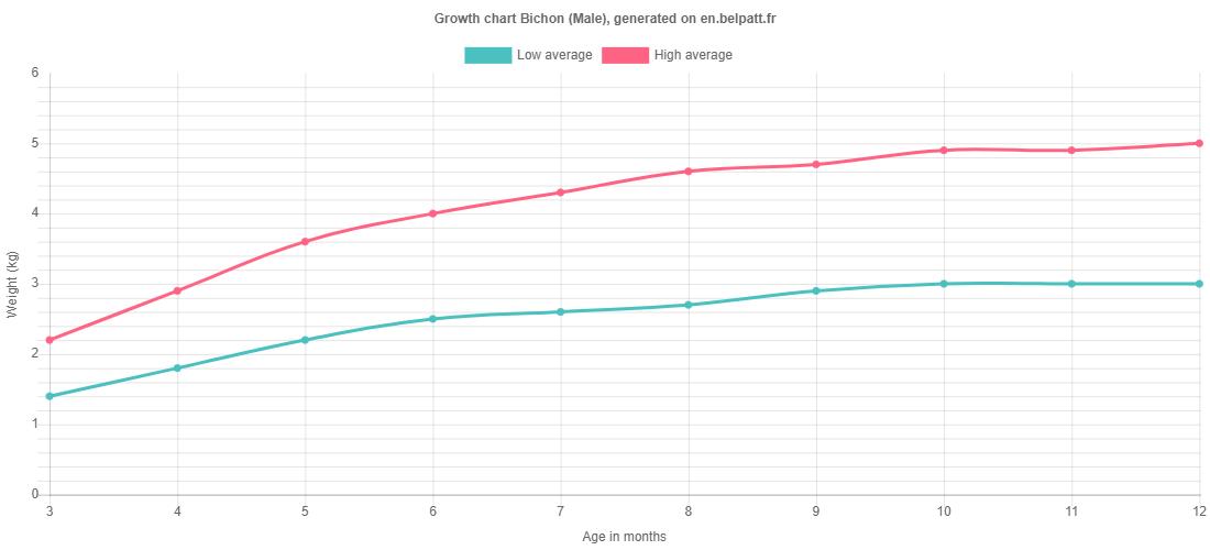 Growth chart Bichon male