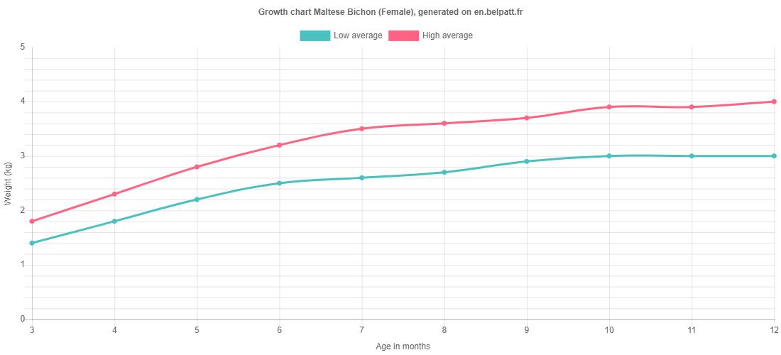 Growth chart Maltese Bichon female