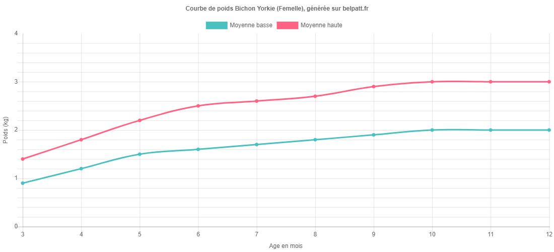 Courbe de croissance Bichon Yorkie femelle