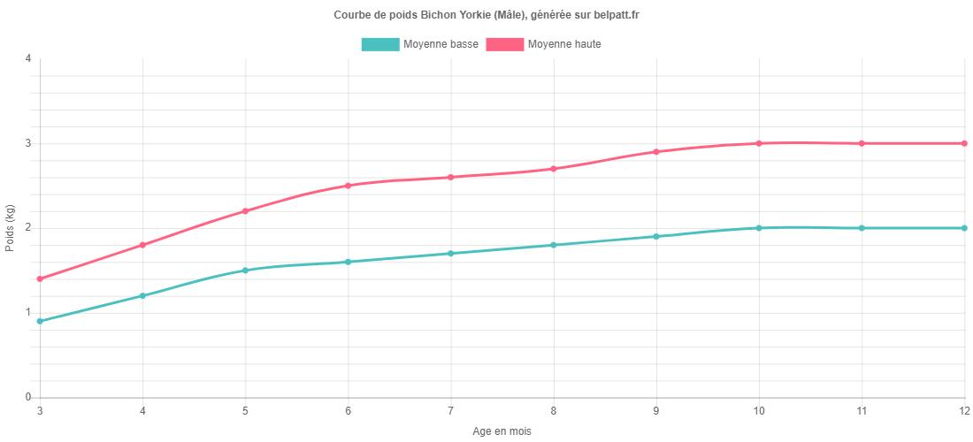 Courbe de croissance Bichon Yorkie male