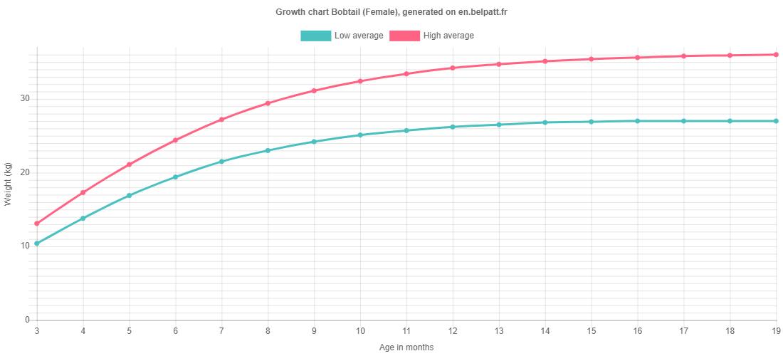 Growth chart Bobtail female