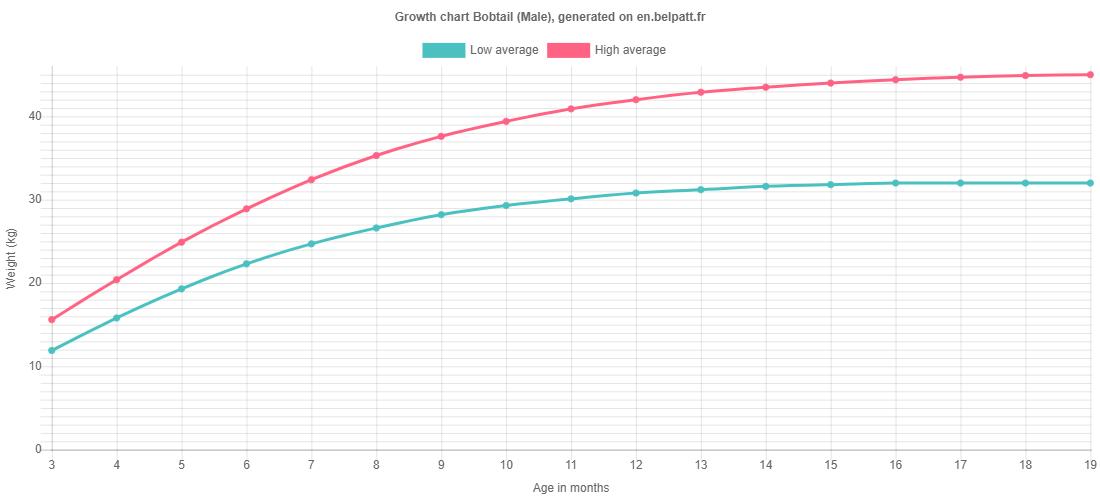 Growth chart Bobtail male