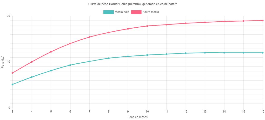 Curva de crecimiento Border Collie hembra
