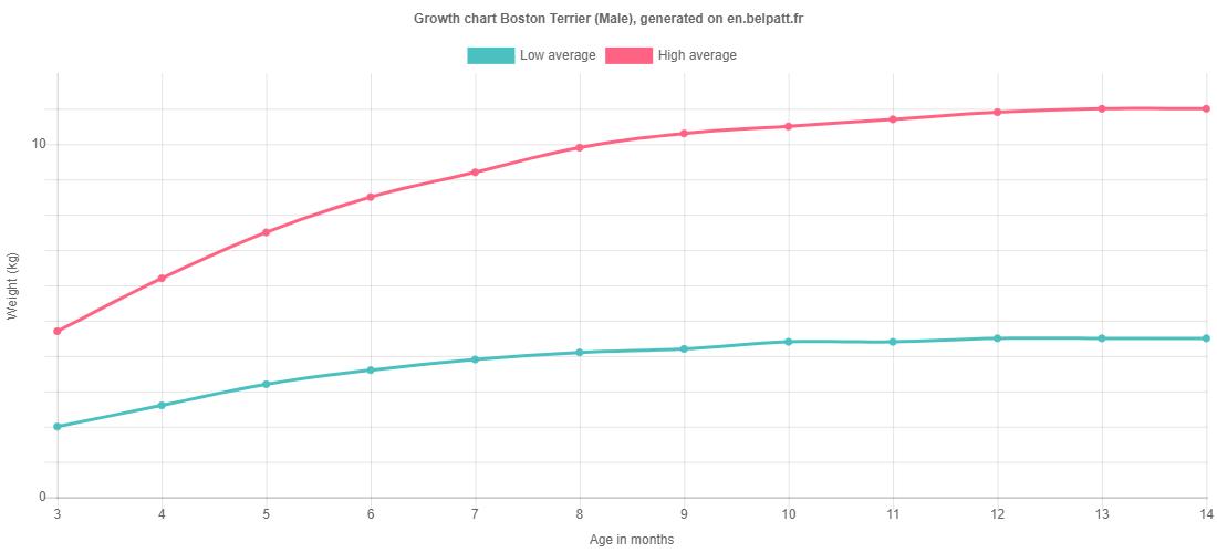 Growth chart Boston Terrier male