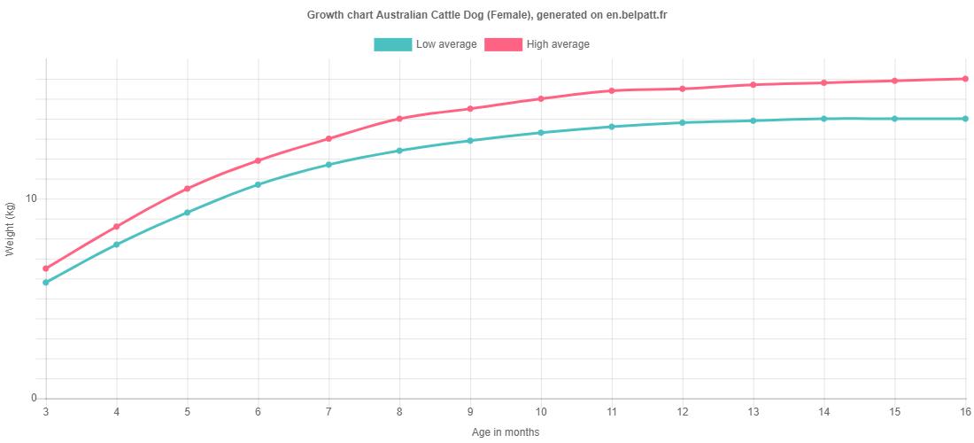 Growth chart Australian Cattle Dog female