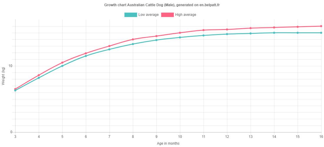 Growth chart Australian Cattle Dog male