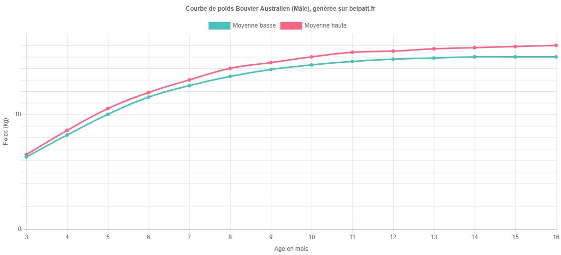 Courbe de croissance Bouvier Australien male