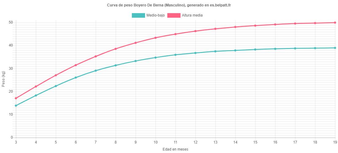 Curva de crecimiento Boyero De Berna masculino