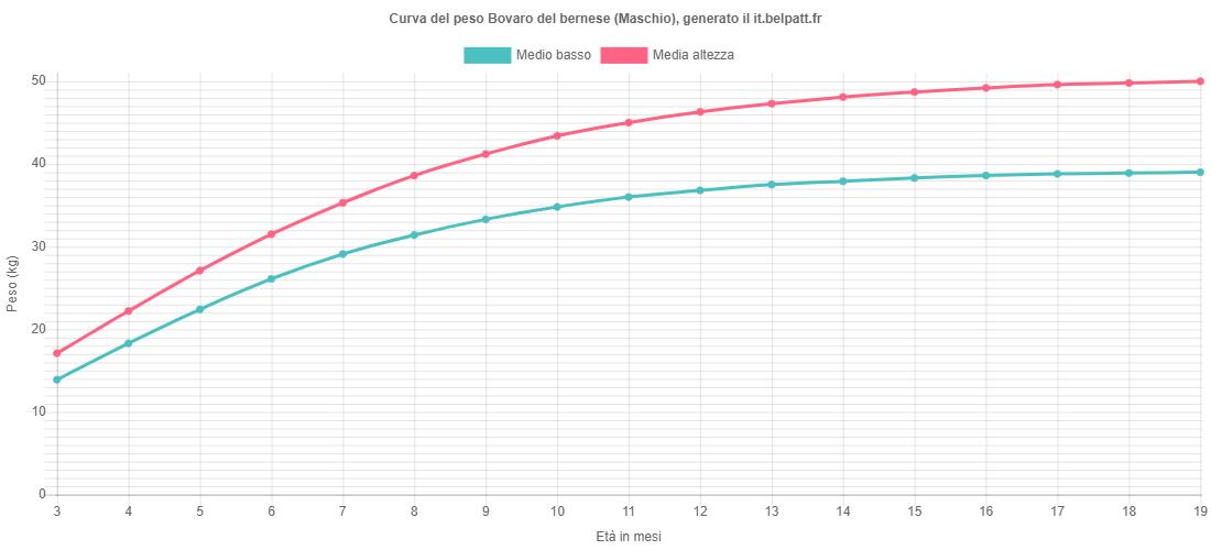 Curva di crescita Bovaro del bernese maschio