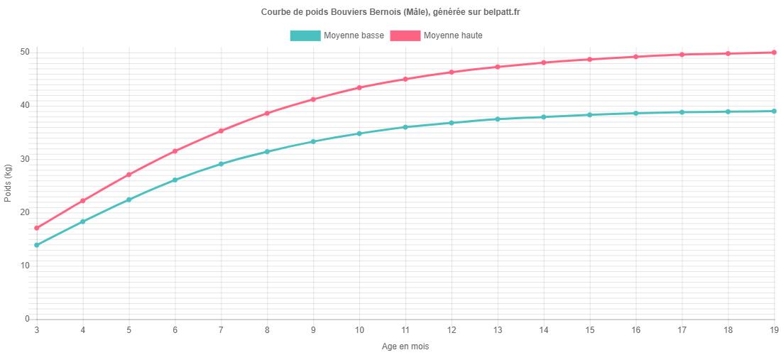 Courbe de croissance Bouviers Bernois male