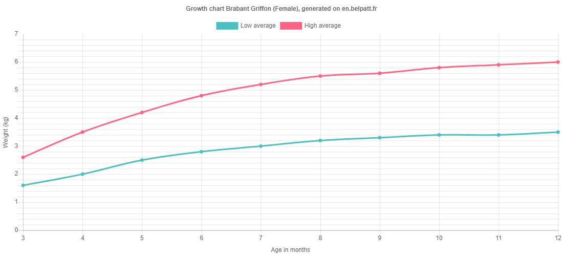 Growth chart Brabant Griffon female