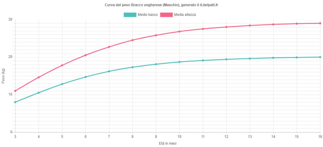 Curva di crescita Bracco ungherese maschio