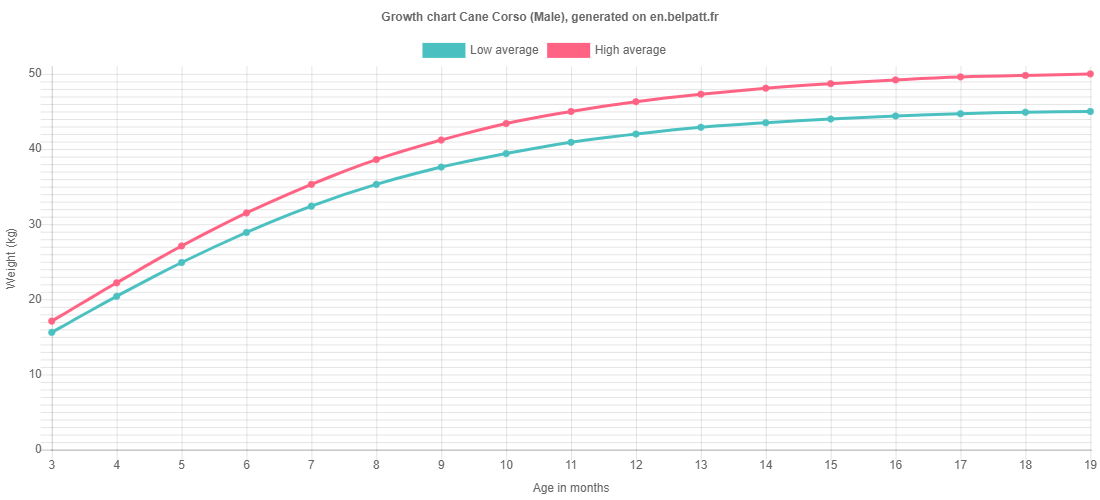 Growth chart Cane Corso male