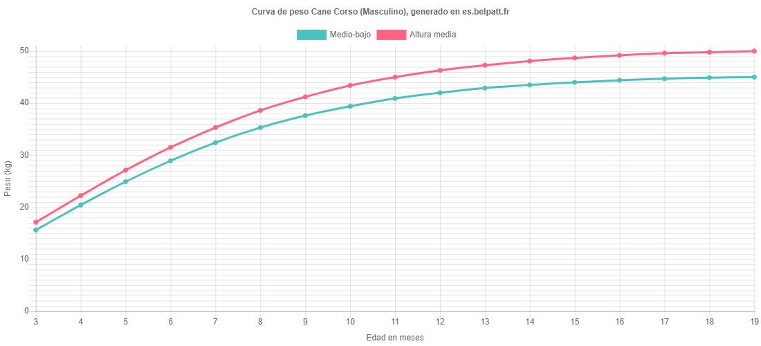 Curva de crecimiento Cane Corso masculino