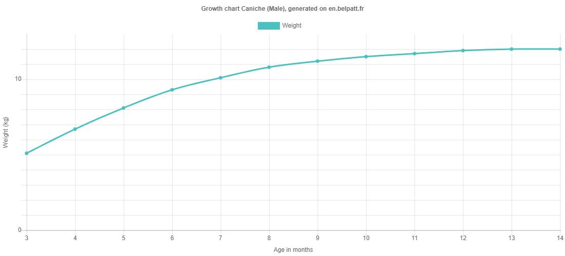 Growth chart Caniche male