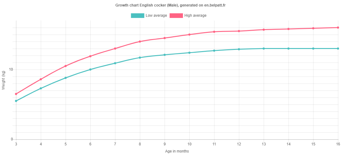 Growth chart English cocker male