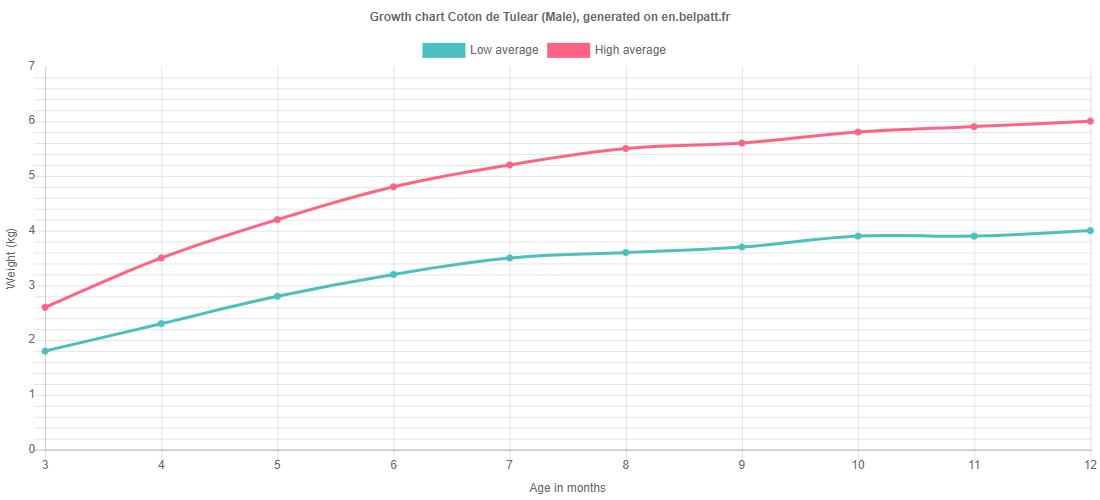 Growth chart Coton de Tulear male