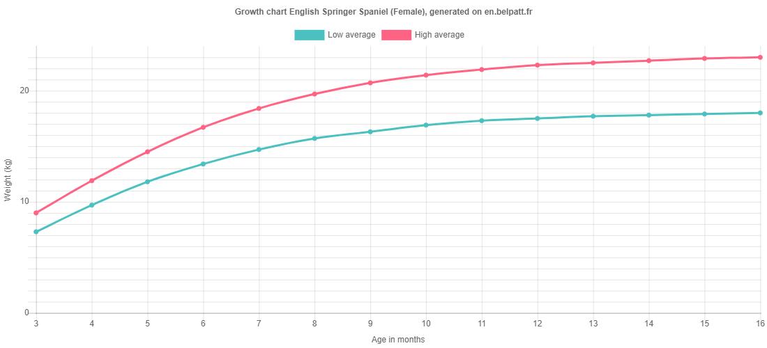 Growth chart English Springer Spaniel female
