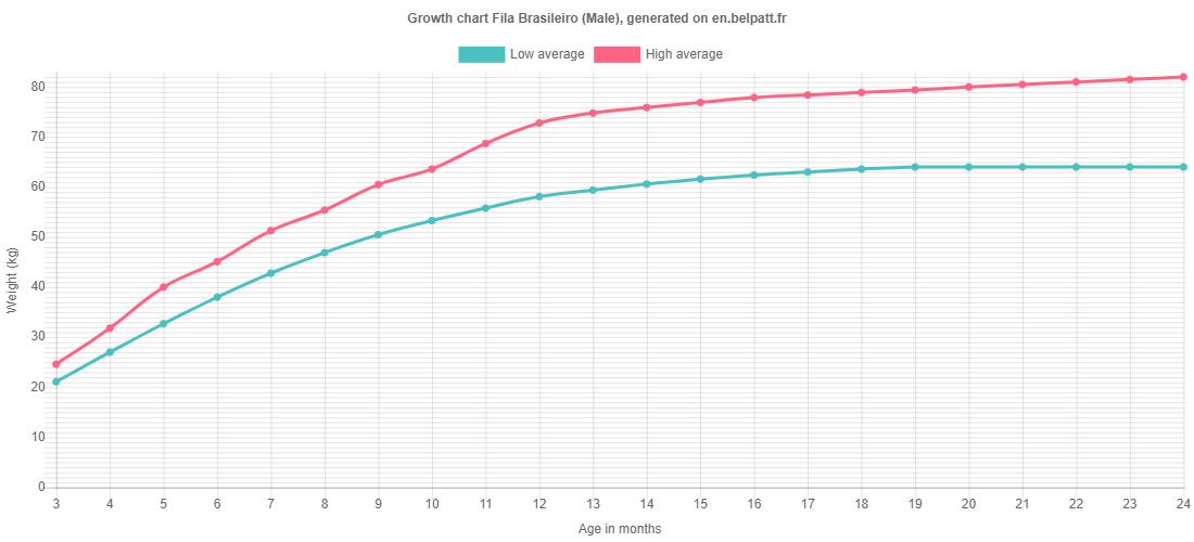 Growth chart Fila Brasileiro male