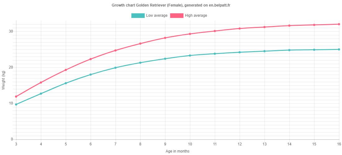 Growth chart Golden Retriever female