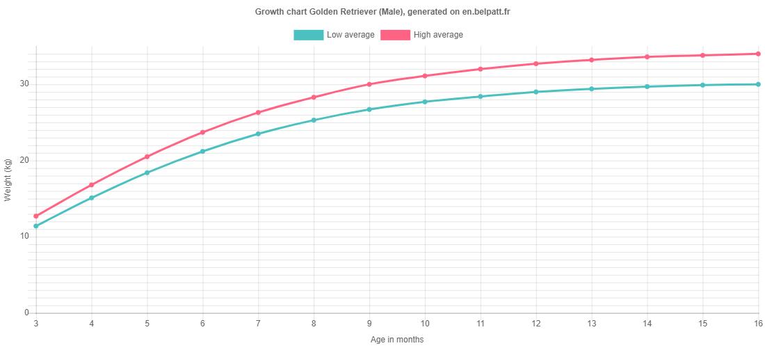 Growth chart Golden Retriever male