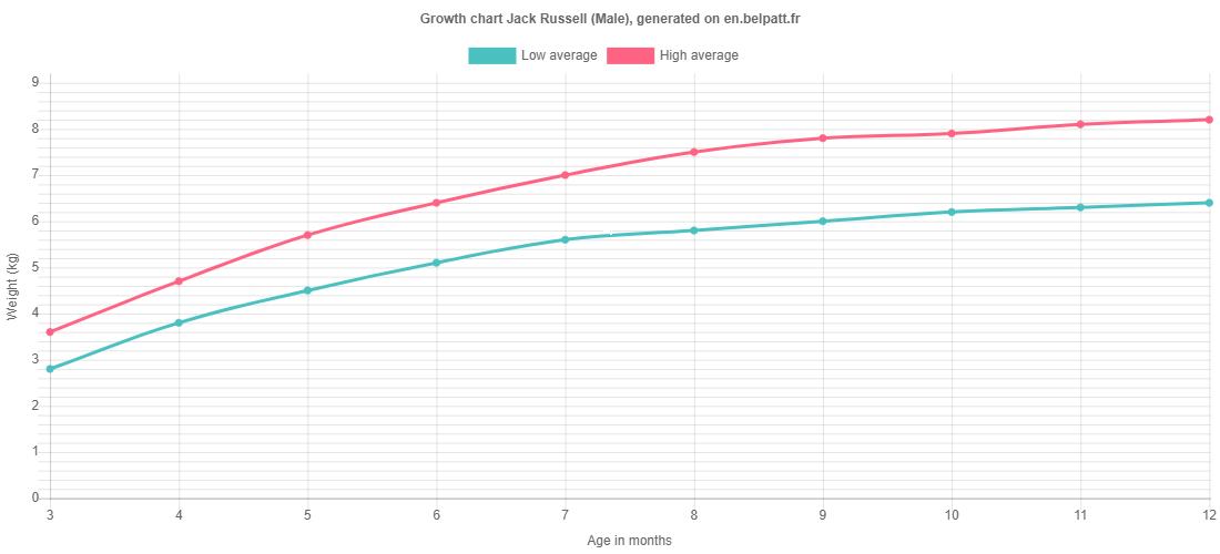 Growth chart Jack Russell male