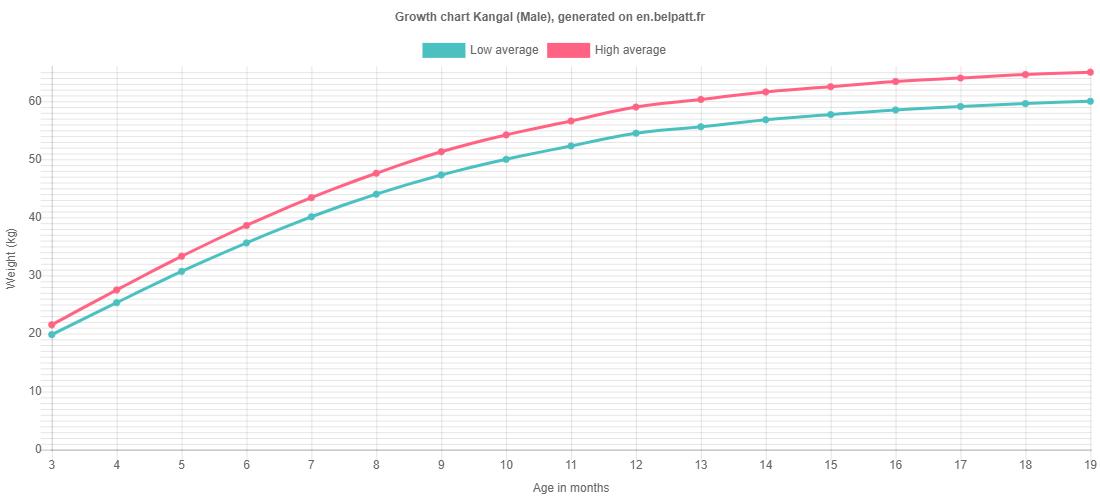 Growth chart Kangal male
