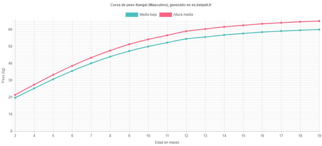 Curva de crecimiento Kangal masculino