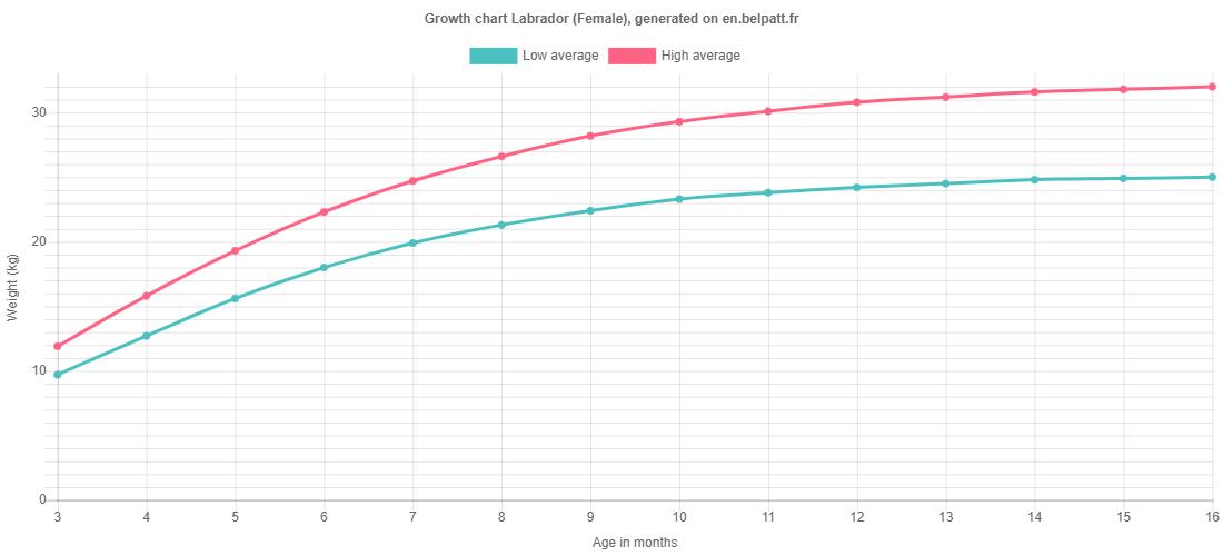 Growth chart Labrador female