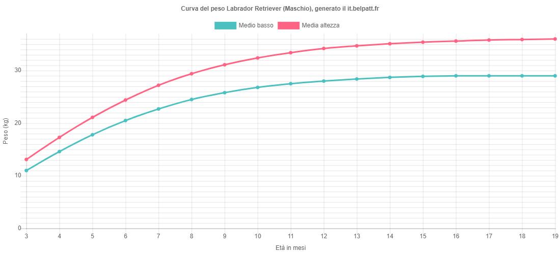 Curva di crescita Labrador Retriever maschio