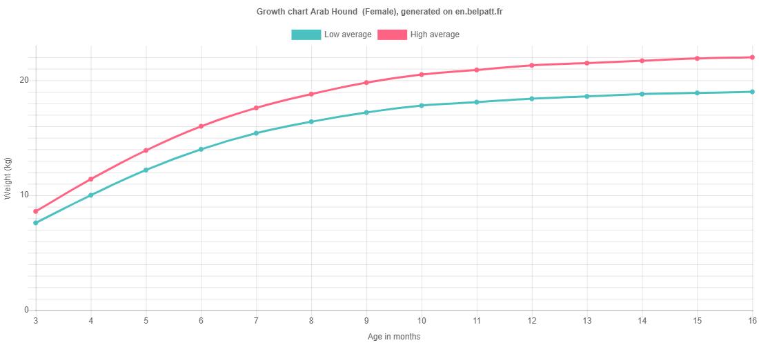 Growth chart Arab Hound  female