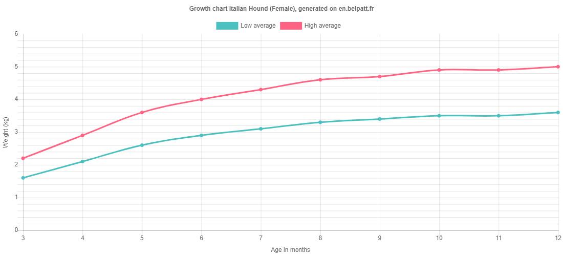 Growth chart Italian Hound female