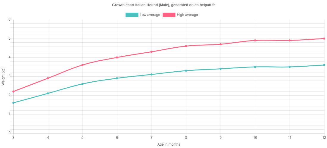 Growth chart Italian Hound male