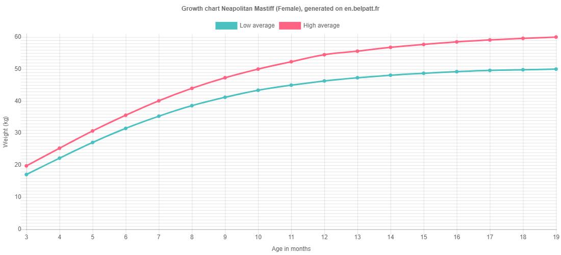Growth chart Neapolitan Mastiff female