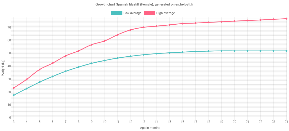 Growth chart Spanish Mastiff female