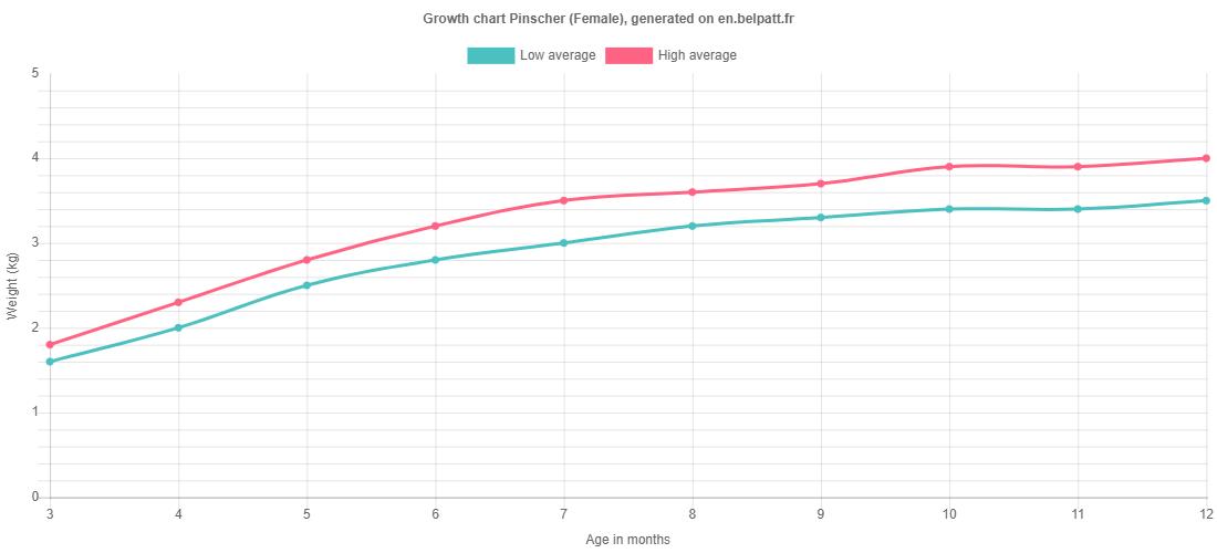 Growth chart Pinscher female