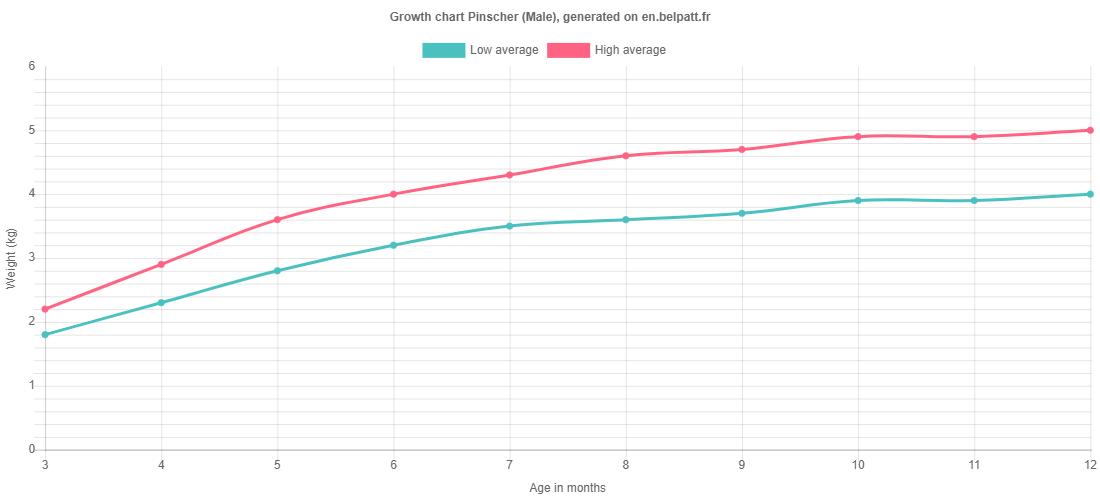 Growth chart Pinscher male