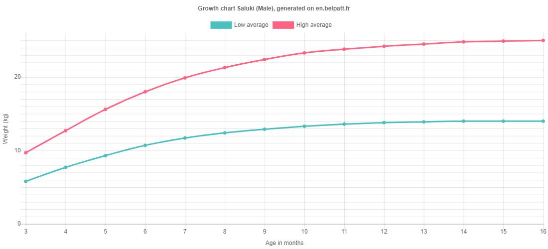 Growth chart Saluki male
