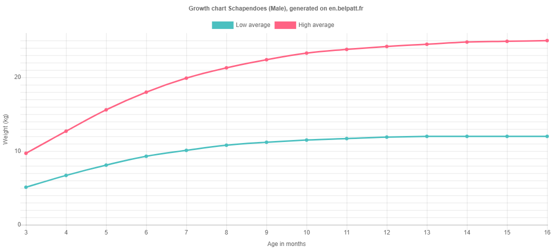 Growth chart Schapendoes male