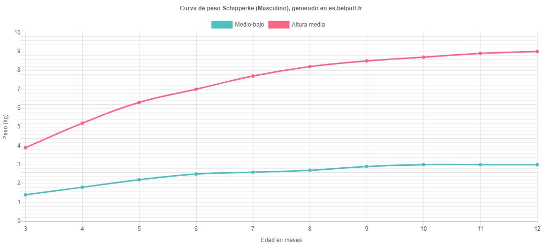 Curva de crecimiento Schipperke masculino
