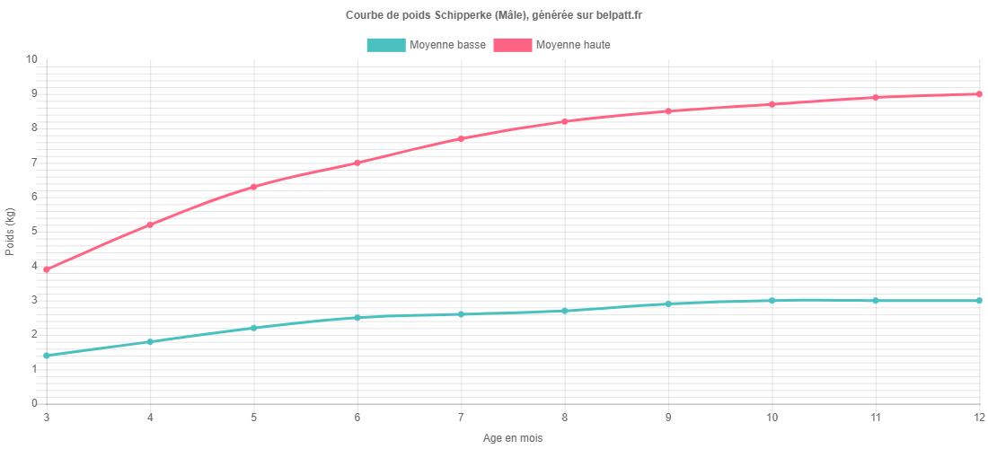 Courbe de croissance Schipperke male