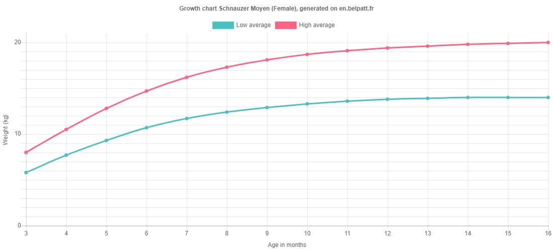 Growth chart Schnauzer Moyen female
