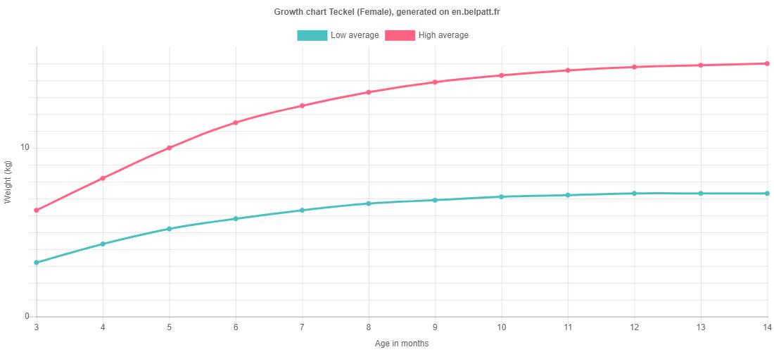 Growth chart Teckel female